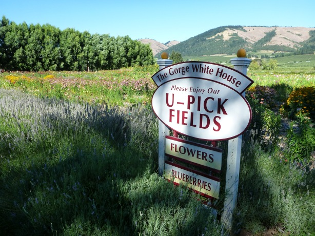 The Gorge White House U-Pick fields