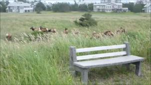 Bench near elk herd