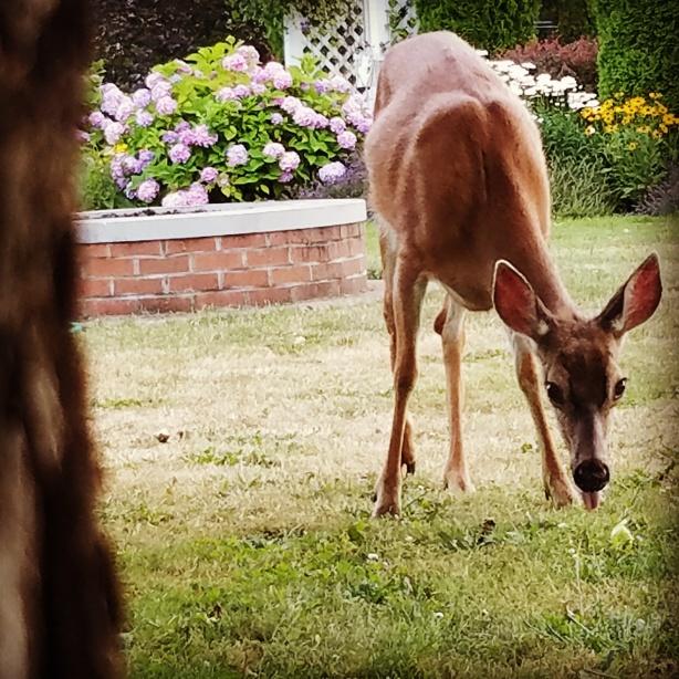 deer-in-oregon